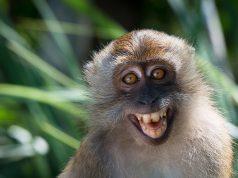 smiling monkey / улыбка обезьяна