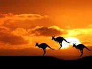 Кенгуру в Австралии