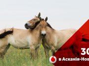 3G Vodafone в Аскания-Нова