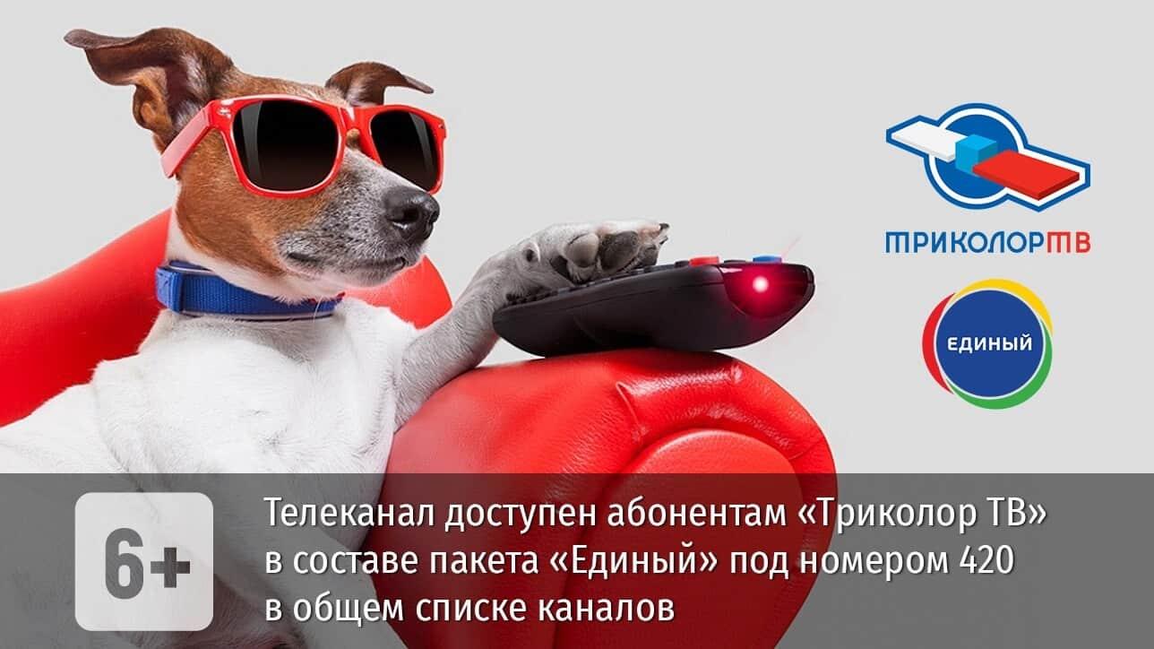 телеканал Пёс и Ко на Триколор ТВ