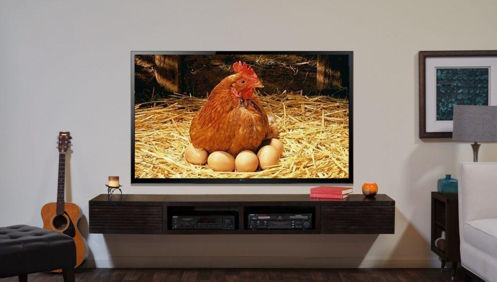 ТВ / телевидение / телевизор